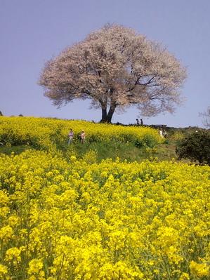 佐賀県武雄にてのサムネール画像